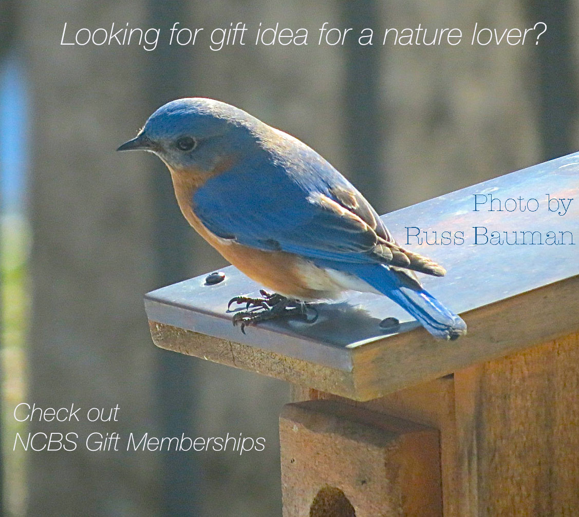 gift idea nature lover