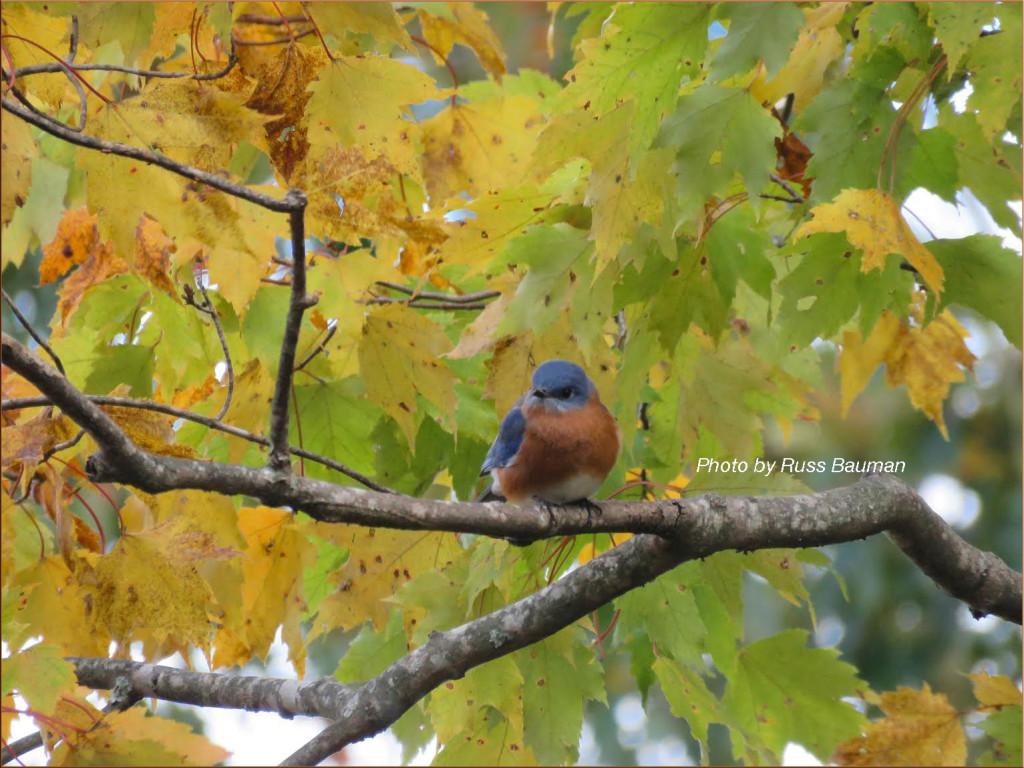 november-bluebird